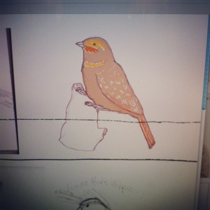 Cirl Bunting in the process of being coloured